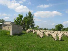Wollseifen Les blocs en été. Plus de petits hommes verts mais des moutons paisibles.....