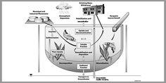 Simultaneous determination of environmental estrogens