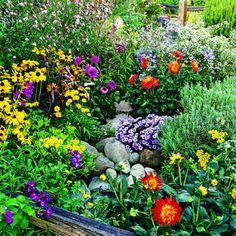9 easy summer flowers - Sunset