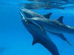Swim with dolphins. Anna's dream!