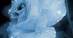 tarjetitas de amor, imagenes dia del amor, san valentin, frases de amor, gifs de amor, gif, amor, imagenes de amor, facebook, tarjetas de amor,wasap