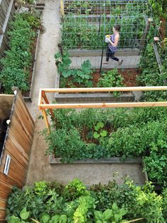 Our garden in early summer 2016. My design of our urban farm incorporates lots of vertical growing and trellis systems in order to grow vegetables on our small space homestead. This section of raised beds in our vegetable garden has pathways of decomposed granite.
