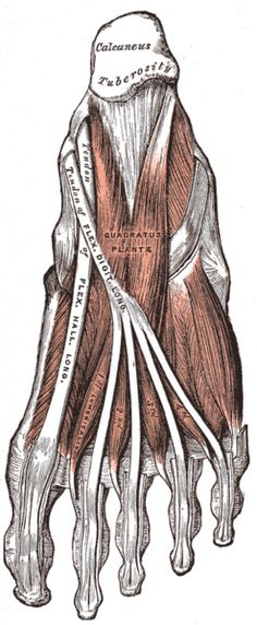 Healing Arts CE: Advanced Anatomy: Myofascial Meridians