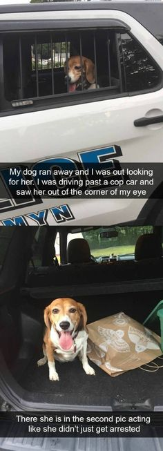 45 Funny Dogs To Brighten Up Your Day On #funnydogs #topdogs #dogmemes #cutedog #cutepuppys #cutedogs