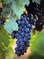 Beau Wine Tours Daily Wine Tour visits at least 4 different boutique Napa Valley Wineries