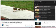 Misteri del cervello / Mysteries of the Brain