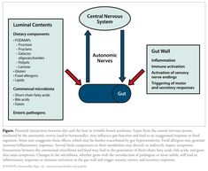 [Hayes et al Irritable Bowel Syndrome: The Role of Food in Pathogenesis and Management Gut Brain, Irritable Bowel Syndrome, Central Nervous System, Abdominal Pain, Ibs, Fodmap, Thyroid, Fibromyalgia
