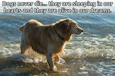 Dogs never die… they are sleeping in our hearts, and they are alive in our dreams.