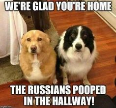 We're glad you're home. The Russians pooped in the hallway!