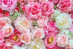 Soft color Roses background royalty-free stock photo