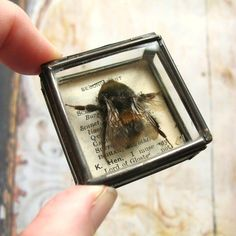 Pocket (Natural History Museum) - Glass Box Assemblage with Bumble Bee ... on sale for £25 from Folksy - Modern British Craft