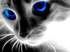 Art DIY 5d kim cương Mosaic blue-eyed Cats thủ công kim cương sơn cross Stitch Kits kim cương mẫu thêu thạch 408