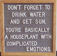 Funny Quotes : QUOTATION – Image : Quotes Of the day – Life Quote A houseplant with complicated emotions. Sharing is Caring Motivacional Quotes, Great Quotes, Funny Quotes, Funny Inspirational Quotes, Word Board, Wise Words, Decir No, Positive Quotes, Favorite Quotes