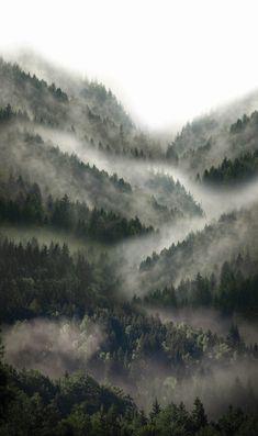 Forest a Office Wall 2019 kategóriában Dark Green Aesthetic, Nature Aesthetic, Aesthetic Grunge, Aesthetic Vintage, Forest Photography, Landscape Photography, Natur Wallpaper, Forest Wallpaper, Misty Forest