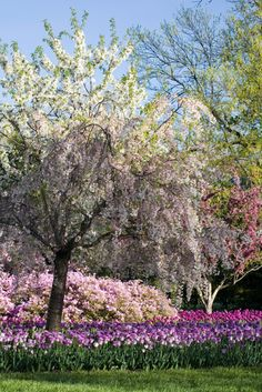 Sherwood Gardens in Baltimore, Maryland