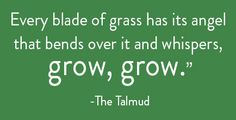 Sarah Kehoe Candy Shop : Ain't Easy Being Green | The Talmud Quote
