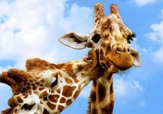 26 Adorable Pictures Of Animals Kissing