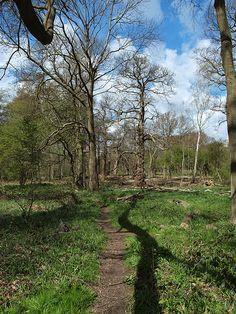 Woodland foot path Ashenbank woods Cobham in Kent