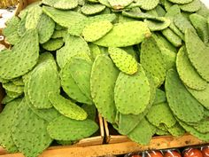 Nopal Cactus paddles..remove the spikes with a sharp knife,  chop into pieces and cook in boiling salted water until tender, serve with scrambled eggs and tomatoes, or in a salad. helps control blood sugar good for diabetics