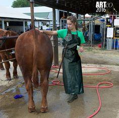 Mackintosh Raincoat, Plastic Aprons, Pvc Apron, Mini Cows, Rubber Dress, Vinyl Clothing, Rubber Gloves, Wellington Boot, Equestrian Outfits