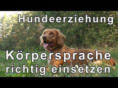 Hundeerziehung & Hundetraining Übungen mit Tipps zum Thema Körpersprache bei der Hundeerziehung - YouTube