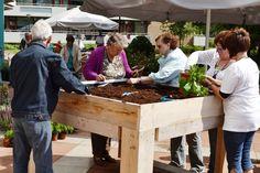 moestuin senioren Plants, Planters, Plant, Planting