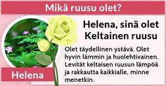 Mikä ruusu olet?