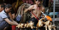 osCurve Brasil : Polêmico festival chinês celebra o verão comendo 1...
