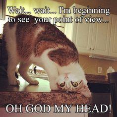 Cute Memes, Funny Cat Memes, Funny Cats, Funny Animals, Cute Animals, Cats Humor, Animal Funnies, Silly Cats, Crazy Cats