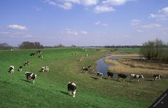 Long Beach seriously needs some farms .   Dikes in Holland | Dike In Holland