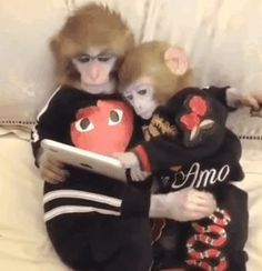 Discover & share this Animated GIF with everyone you know. GIPHY is how you search, share, discover, and create GIFs. Baby Animals, Funny Animals, Cute Animals, Photos Singe, Memes Humor, Funny Memes, Funny Gifs, Monkey Pictures, Cute Monkey