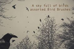 Bird Brushes - A Sky full of Birds by Dirk's texture pit on @creativemarket