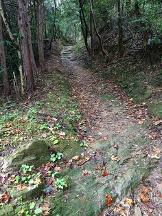 A beautiful stretch of the pilgrimage path between Temple #11 (Fujidera) and Temple #12 (Shosanji).