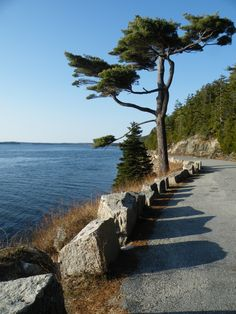 Sargent Drive - Northeast Harbor,Maine. Beautiful curvy drive along the northeast US's only fjord