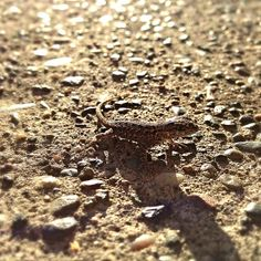 Baby lizard by lefleurpixie, via Flickr taken with an iphone.