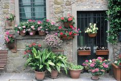 potted plants, by astrid