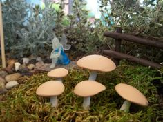"set of 10 miniature fairy garden accessories mushrooms toadstools tan white $8.99. ebay seller wordit. 3/4"" to 1 1/2"" tall."