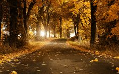 Foliage covered park wallpaper | Wallpaper Wide HD