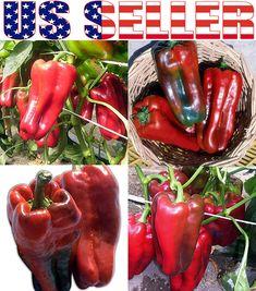 Sugar Snap Pea Seed ¼oz to 4oz Sweet Edible Pod English Running Peas Seeds