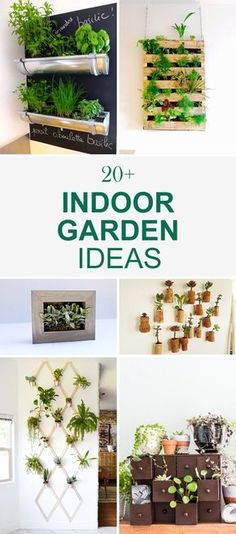 Want to start an indoor garden? Check out these ideas for a dash of inspiration! Indoor gardens can do wonders for your home. Besides adding to the aesthetic appeal of your home, indoor gardens sup… Small Backyard Gardens, Backyard Garden Design, Garden Landscaping, Landscaping Ideas, Diy Planters, Garden Planters, Glass Garden, Container Garden, Water Garden