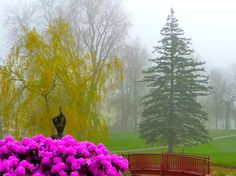 This is the view of Kismet Inn.  It is the Library Park in Bath, Maine.  During May it is in full bloom.  This photo is on a misty May morning.
