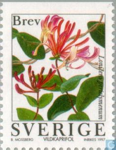 Lonicera periclymenum (honeysuckle or woodbine) Flowers. Stamp from Sweden, circa 1997