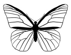 draw anatomy wing butterfly animals butterflies drawing line monarch drawings wings patterns easy tutsplus flower outline side mariposas luthfiannisahay simple