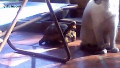 Гифки с котами Funny gif's