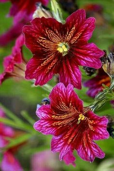 ▓⃢⃢🌻⃢⃢▓  #Flowers #Çicekler #Rose #Gül   ▓⃢⃢🌻⃢⃢▓