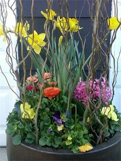 Spring Splendor : Daffodils, Pansies, Curly Willow and more jump you right into Spring!!!