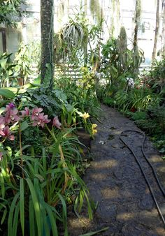 Tropical Houseplants - Want to be able to indentify plants with your mobile phone? Check out GardenAnswers.com!
