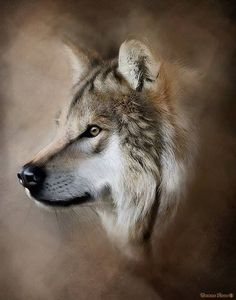 Wolf in Observance. Wolf Photos, Wolf Pictures, Wolf Spirit, My Spirit Animal, Wildlife Paintings, Wildlife Art, Beautiful Creatures, Animals Beautiful, Regard Animal