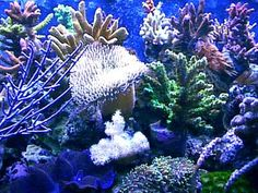 Washington, Oct 21 : International marine scientists have said that coral reefs across Indian Ocean are dying...