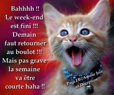 Ahhhh !! Le week-end est fini !!! Demain faut retourner au boulot !!! Mais pas grave la semaine va être courte haha !!